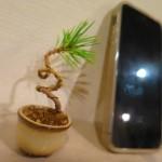 「ミニ盆栽&苔玉」を観に行ってきた
